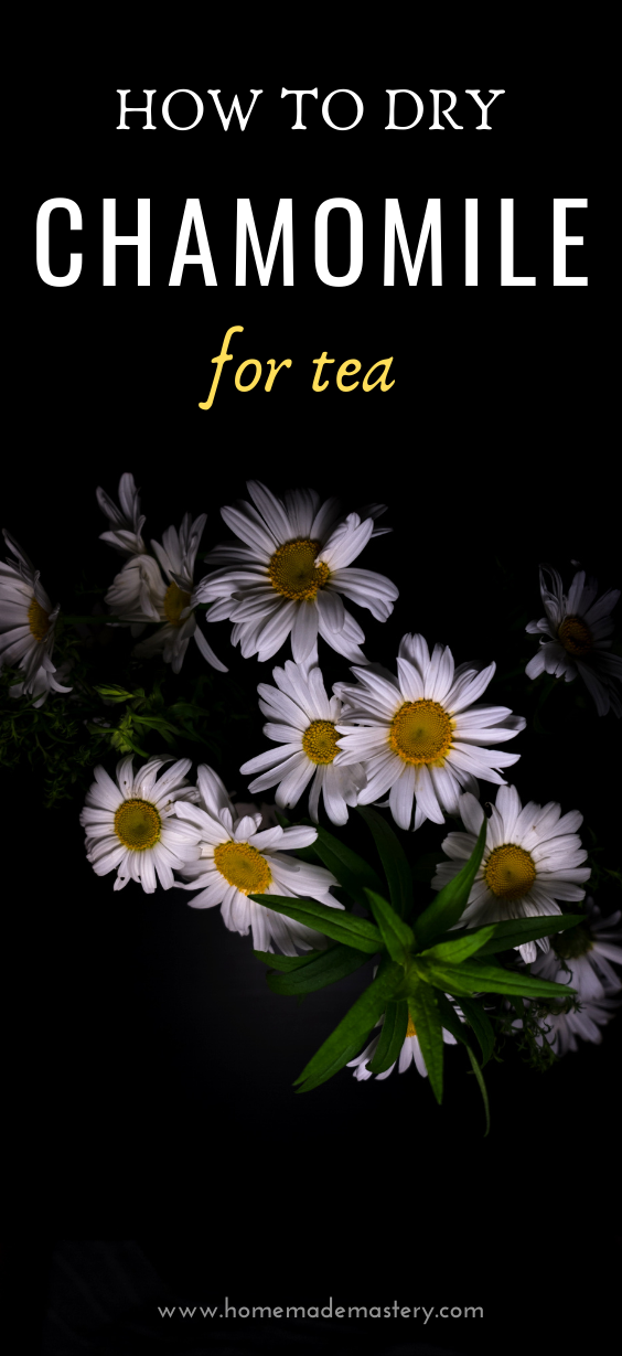 How to dry chamomile for tea! How to dry herbs! Herbs are great for health and easy to grow at home, one of the best way to preserve fresh herbs is drying. Learn about the health benefits of this medicinal herb and how to dry it at home, so you can use it in tea.
