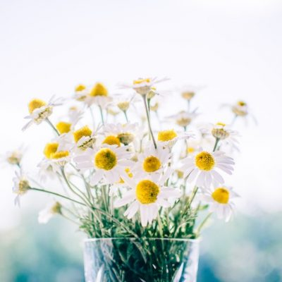 How To Dry Chamomile For Tea