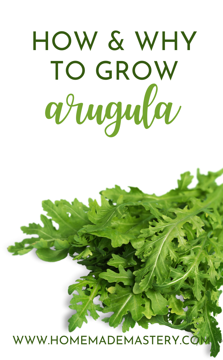 Growing arugula at home: Learn how to grow arugula and why to do so! We're gonna learn how to grow arugula in pots as well as in your backyard! We'll also talking about the health benefits of arugula and share some healthy arugula recipes including healthy salads, and some easy pasta and pizza recipes!