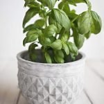 How to preserve herbs to have for months and even up to an year. Learn how to preserve basil, parsley, mint, oregano and so many other herbs with these easy methods.